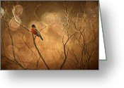 Canada Digital Art Greeting Cards - Robin Greeting Card by Lois Bryan