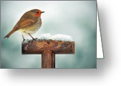 Shovel Greeting Cards - Robin On Garden Spade In Snow Greeting Card by Www.mosbornephotography.co.uk