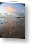 East Coast Greeting Cards - Rocko at Sunrise Greeting Card by Mandy Shupp