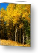 The Lightning Man Greeting Cards - Rocky Mountain Aspen Color Greeting Card by James Bo Insogna