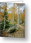 Wall Calendars Greeting Cards - Rocky Mountain Aspens Greeting Card by Brent Parks