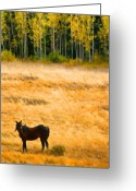 Horses Art Print Greeting Cards - Rocky Mountain Autumn Graze Greeting Card by James Bo Insogna