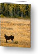 Horses Art Print Greeting Cards - Rocky Mountain High Country Autumn Graze Greeting Card by James Bo Insogna
