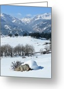 Mountain Range Greeting Cards - Rocky Mountain National Park Greeting Card by Julie Rideout