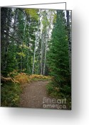 Wall Calendars Greeting Cards - Rocky Mountain Trail to..... Greeting Card by Brent Parks