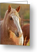 Bronc Greeting Cards - Rodeo Bronc Beauty Greeting Card by Gus McCrea
