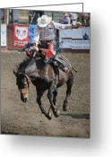 Bronc Greeting Cards - Rodeo Buck Greeting Card by Melisa Meyers