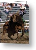 Pacific Coast States Greeting Cards - Rodeo Competitor In A Steer Riding Greeting Card by Chris Johns