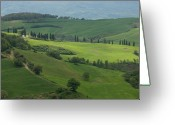 Cypress Tree Greeting Cards - Rolling Hills And Vineyards Make Greeting Card by Joel Sartore
