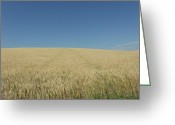 Unlimited Gold Greeting Cards - Rolling Wheat Fields Greeting Card by Brian  Maloney