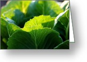 Lettuce Green Greeting Cards - Romaine Study Greeting Card by Angela Rath