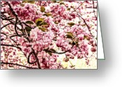 Post Mixed Media Greeting Cards - Romantic Cherry Blossoms Greeting Card by Zeana Romanovna
