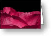 Photography Tk Designs Greeting Cards - Romantic Pink Rose Petals Greeting Card by Tracie Kaska