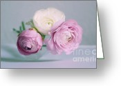 Ranunculus Photo Greeting Cards - Romantique  Greeting Card by Kristin Kreet