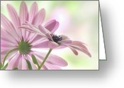 Asteraceae Greeting Cards - Romeo and Juliet Greeting Card by John  Poon