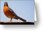 Up On The Roof Greeting Cards - Roofed Robin Greeting Card by Lori Lafargue