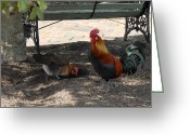 Spirit Hawk Art Greeting Cards - Rooster 220 Greeting Card by Joyce StJames
