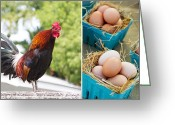 Rooster Greeting Cards - Rooster Eggs Greeting Card by Rebecca Cozart