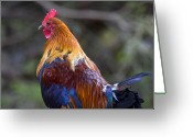 Rooster Greeting Cards - Rooster Rooster Greeting Card by Mike  Dawson