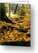 Baraboo Greeting Cards - Root Steps to The Sun Greeting Card by Zafer Gurel