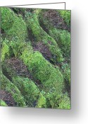 Forest Floor Greeting Cards - Roots Of The Ages Greeting Card by Tim Allen