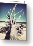 White Sand Greeting Cards - Roots to the Sky-Vintage Greeting Card by Chris Andruskiewicz