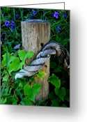 Lyle  Huisken Greeting Cards - Rope and Vine Greeting Card by Lyle  Huisken