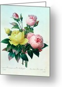 Redoute Greeting Cards - Rosa Lutea and Rosa Indica Greeting Card by Pierre Joseph Redoute
