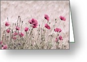 Pflanzen Greeting Cards - Rosa Mohnblumen Greeting Card by Tanja Riedel