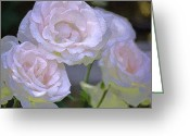 Floral Greeting Cards - Rose 120 Greeting Card by Pamela Cooper