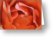 Photographic Art Greeting Cards - Rose Abstract Greeting Card by Rona Black