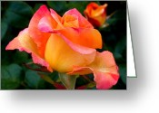 Fuchsia Greeting Cards - Rose Beauty Greeting Card by Rona Black