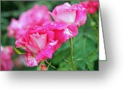 Rosaceae Greeting Cards - Rose Bonbons Greeting Card by Rona Black