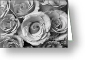 Bouquet Of Roses Greeting Cards - Rose Bouquet in Black and White Greeting Card by James Bo Insogna