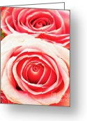 Colorful Roses Greeting Cards - Rose Bouquet in Pink Greeting Card by Kristin Kreet