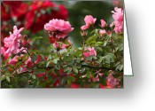 Chevalier Greeting Cards - Rose Branch Greeting Card by Elizabeth Chevalier