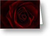 Flower Blossom Greeting Cards - Rose Damour Greeting Card by Joachim G Pinkawa