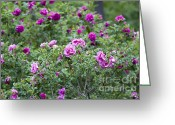 Wall Pictures Greeting Cards - Rose Garden Greeting Card by Frank Tschakert