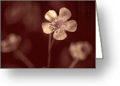 Wildflower Fine Art Greeting Cards - Rose Grain Wildflower Greeting Card by Bill Tiepelman
