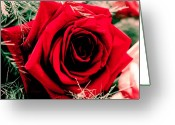 William And Magdalena Green Greeting Cards - Rose Greeting Card by Magdalena Green