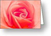 Cindy Longhini Greeting Cards - Rose Micro 2 Greeting Card by Cindy Lee Longhini
