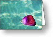 Rose Petals Greeting Cards - Rose Petal Floating On Water Greeting Card by Gerard Plauche