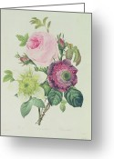 Pierre Joseph (1759-1840) Greeting Cards - Rose Greeting Card by Pierre Joseph Redoute