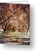 Autumn Photographs Greeting Cards - Rose Road Greeting Card by Andrea Hazel Ihlefeld