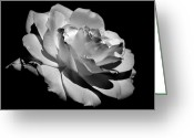 Rosaceae Greeting Cards - Rose Greeting Card by Rona Black