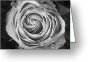 Bo Insogna Greeting Cards - Rose Spiral Black and White Greeting Card by James Bo Insogna