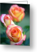 Flower Greeting Cards Greeting Cards - Rose Trio Greeting Card by Kathy Yates