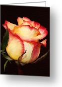Cream Roses Greeting Cards - Rose with effect Greeting Card by Cathie Tyler