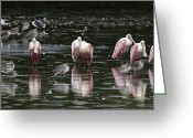 Misty Prints Prints Greeting Cards - Roseate Reflections - Spoonbill Nature Scene Greeting Card by Rob Travis