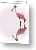 Roseate Spoonbill Greeting Cards - Roseate Spoonbill Greeting Card by Vicki Jauron